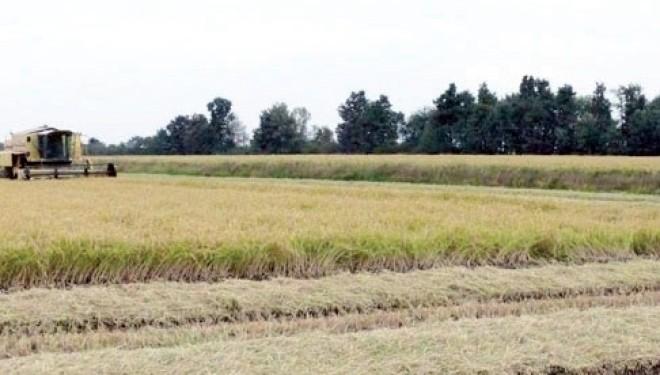 VERCELLI. (r.a.) Strada del riso vercellese di qualità: La Regione approva