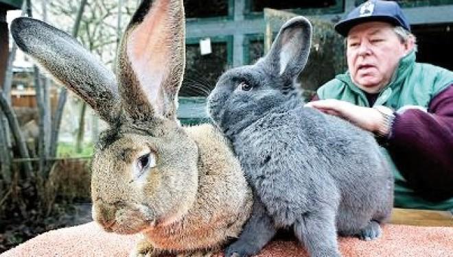Mostra interregionale di coniglicoltura