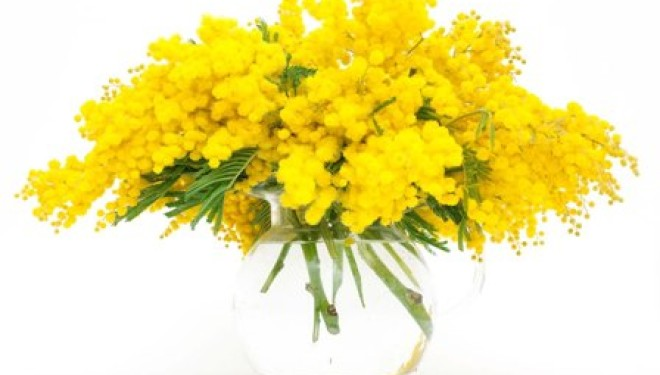 ALICE CASTELLO: Mimose all'ufficio postale
