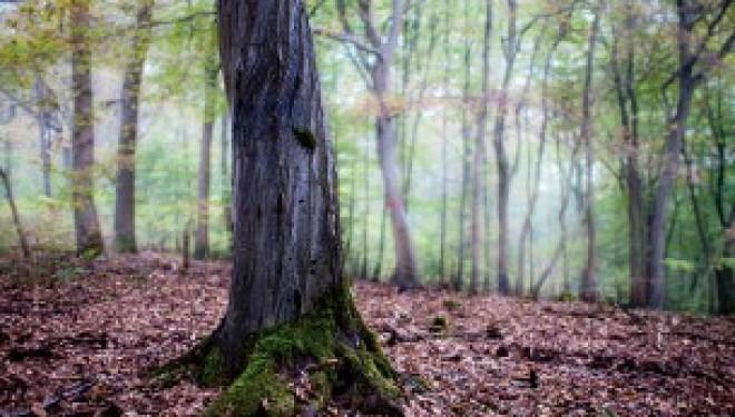 Il bosco della Partecipanza